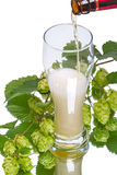 Light Beer and branch of hop Stock Images