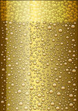 Light beer Royalty Free Stock Photos