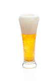 Light beer with the foam in a glass Stock Image