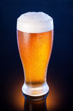 light beer in frosty glass over dark blue background Royalty Free Stock Images