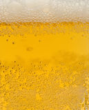 Light beer is in glass Stock Photography