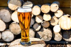 Light beer in a glass goblet on the background of firewood. Rest in the country. Beer foam in the sunlight