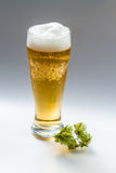 Light beer and hop isolated Stock Photos