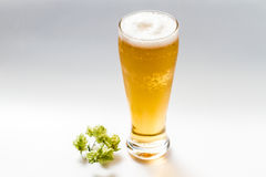 Light beer and hop isolated Stock Photo