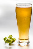 Light beer and hop isolated Stock Images