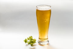 Light beer and hop isolated Royalty Free Stock Photo