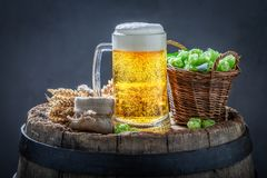 Light beer with hops and wheat on old barrel. Light beer with hops and wheat on old wooden barrel royalty free stock photo