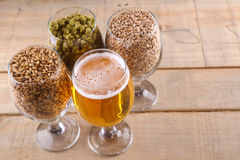 Light beer and ingredients Stock Image