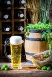 Light beer made of fresh hops Stock Photos