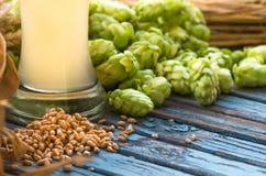 Light beer, malt, hops, barley ears on the table. Light beer malt, hops, barley ears on the table, alcohol Royalty Free Stock Photo