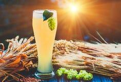 Light beer, malt, hops, barley ears on the table. Light beer - not filtered , malt, hops, barley ears on the table, alcohol, blue tone Royalty Free Stock Photo