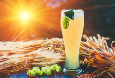 Light beer, malt, hops, barley ears on the table. Light beer - not filtered , malt, hops, barley ears on the table, alcohol, blue tone Stock Images