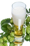 Light beer and plant hop Stock Photo