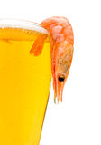 Light beer and shrimp on a white background. Glass of light beer and shrimp on a white background Royalty Free Stock Photos