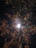 Trees. Light behind tree night paris automne Stock Image