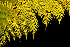 Light behind tropical leaves Royalty Free Stock Photo