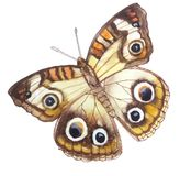 Light beige butterfly with 6 elegant eyes. And brown patterned contour and orange stripes disclosed watercolor paintingn Stock Photo