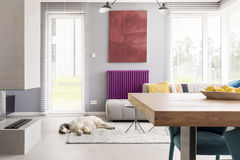 Light beige contemporary living room. Light beige couch, table, fireplace, artwork, bright windows and purple accent in contemporary living room with dog Royalty Free Stock Photo