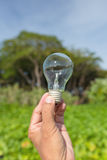 Light blub in man`s hand Royalty Free Stock Photography