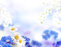 Light blue flowers background. Royalty Free Stock Photo