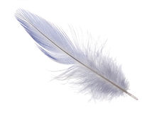 Light blue long feather on white background Stock Photos