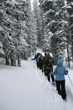 Light blue parka, snowshoe hikers in woods,. Shrine pass, near Vail Pass, Colorado Stock Images