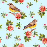 Light blue seamless pattern with dog roses and birds Stock Image