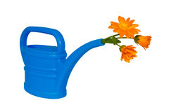 Light-blue watering pot with orange flower at its spout Royalty Free Stock Photos