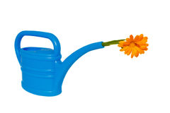 Light-blue watering pot with orange flower at its  Stock Image