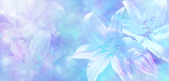 Light Blue Wedding Bokeh Lillies Banner Royalty Free Stock Photos