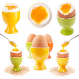 Light boiled egg in egg cup Stock Photography