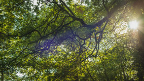 Light through the branches. In the forest Royalty Free Stock Images