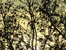 Light through branches royalty free stock photos