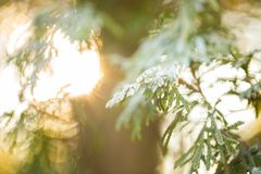 Sun light in the forest royalty free stock photography
