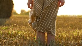 A light breeze moves dress girl in slow motion. Women`s legs close-up on a wheat field. The concept of agriculture and. Harvesting. Close up stock video