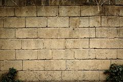 Light brick wall and shrub abstract background stock photography