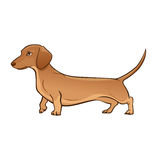Light Brown Dachshund. Dog vector illustration Royalty Free Stock Photography