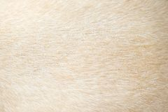 Free Light Brown Dog Fur Patterns Texture , Nature Animal Background Royalty Free Stock Image - 133829206