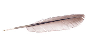 Light brown feather isolated on white Stock Image