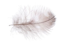 Light brown feather in spots Stock Photography