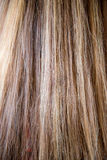 Light brown hair closeup. Of teen girl royalty free stock photography