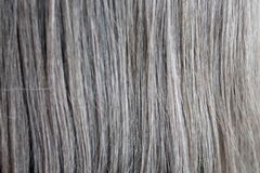 Light brown hair texture, background. Closeup royalty free stock image
