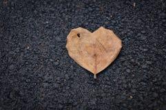 Light brown heart shape leaf on asphalt floor. Light brown heart shape leaf on black asphalt floor Royalty Free Stock Images