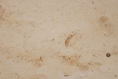 Light brown marble background Royalty Free Stock Image