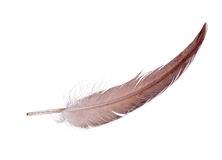 Light brown single isolated feather Stock Images