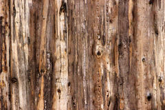 Light brown wood texture. Background dark old wooden panels Royalty Free Stock Photography