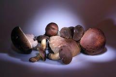 Light brush. Forest mushrooms Stock Images