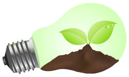 Light bulb. With a plant. Vector illustration royalty free illustration