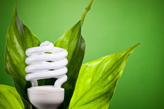 Light Bulb. Energy efficient light bulb with green leaves Royalty Free Stock Images