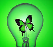 Light bulb. Monarch Butterfly in light bulb royalty free stock photos